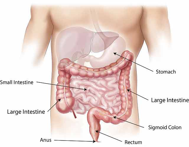 5 Steps to Improve Your Body's Digestive System